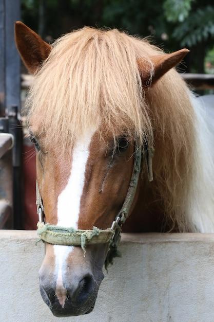 Cavalo castanho Foto Premium