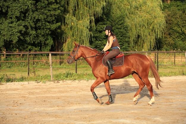 Cavalo e cavaleiro Foto Premium