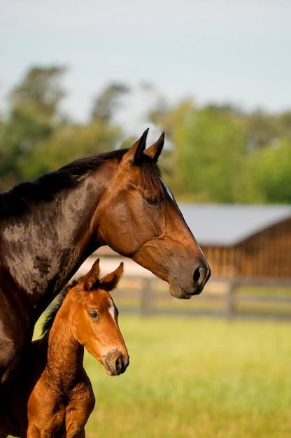 Cavalo e potro Foto Premium