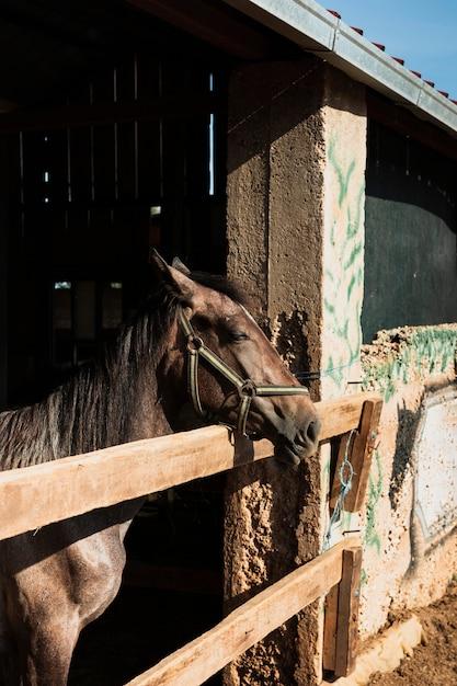 Cavalo em pé com a cabeça fora do estábulo Foto gratuita