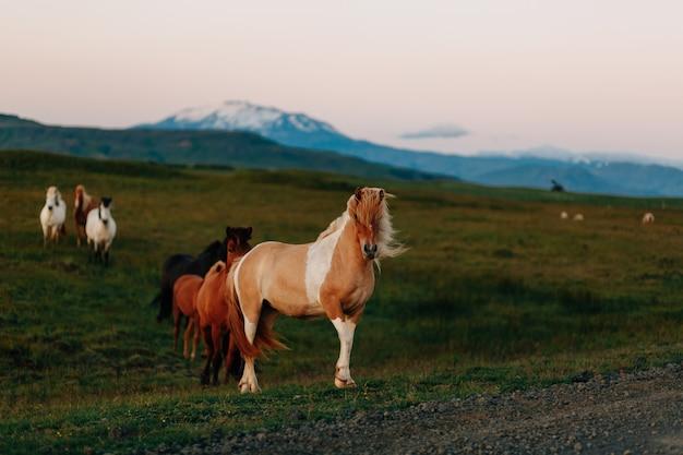 Cavalo em um campo, animais de fazenda, série natureza Foto Premium