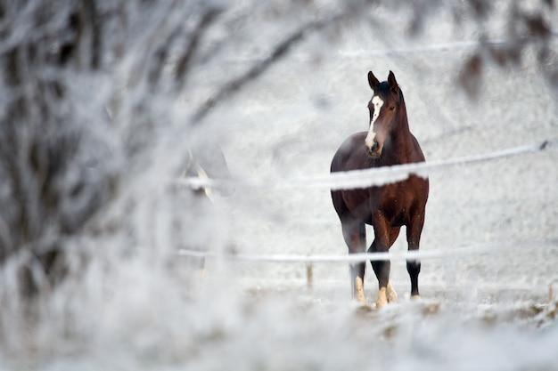 Cavalo em uma paisagem de inverno Foto Premium