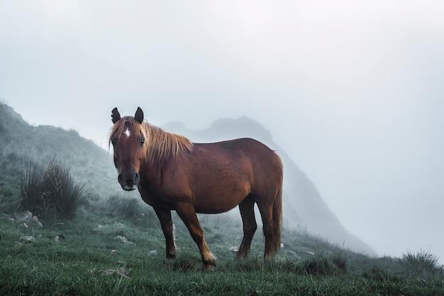 Cavalo livre no topo das peñas de aya Foto Premium