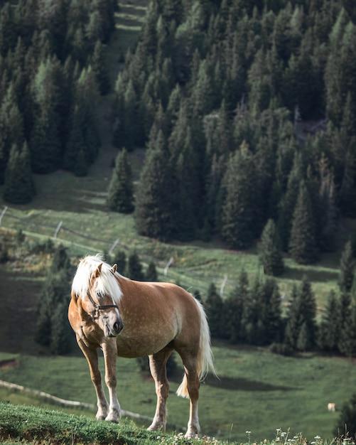 Cavalo marrom com crina branca no topo de uma colina com pinheiros ao fundo Foto gratuita