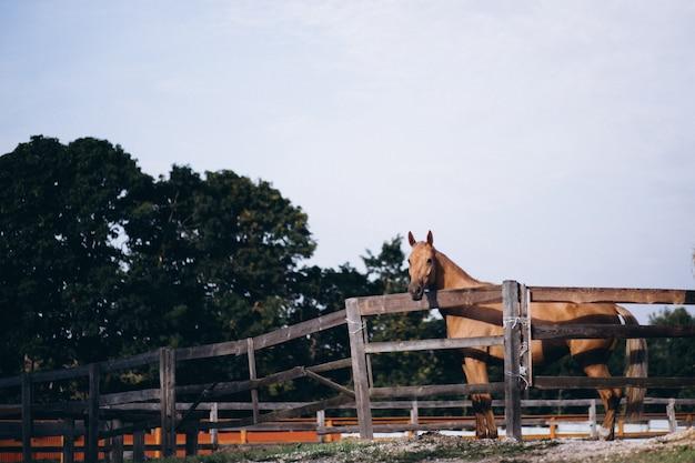 Cavalo marrom no rancho Foto gratuita
