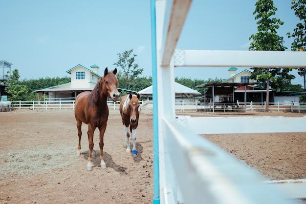 Cavalo na fazenda de cavalos Foto gratuita