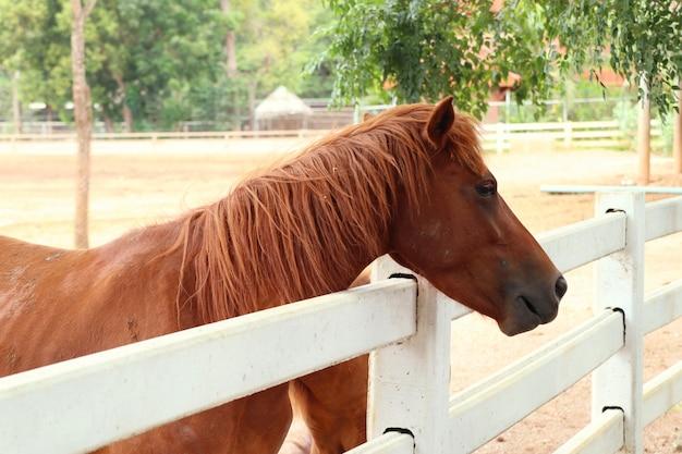 Cavalo na fazenda Foto Premium