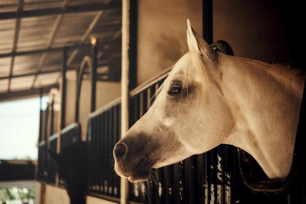 Cavalo na natureza Foto gratuita