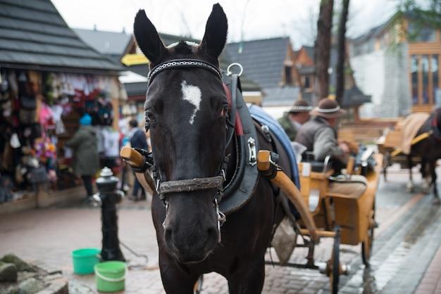 Cavalo na vila de zakopane, polônia, polônia Foto Premium