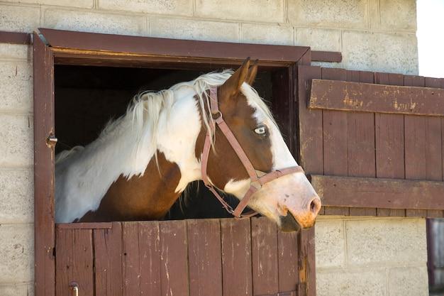 Cavalo no celeiro Foto Premium
