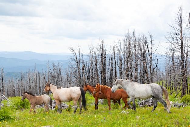 Cavalo pastando no vale da montanha verde montanha. paisagem de pedra perfeita. prado ensolarado com cavalos cinza e marrons correndo Foto Premium