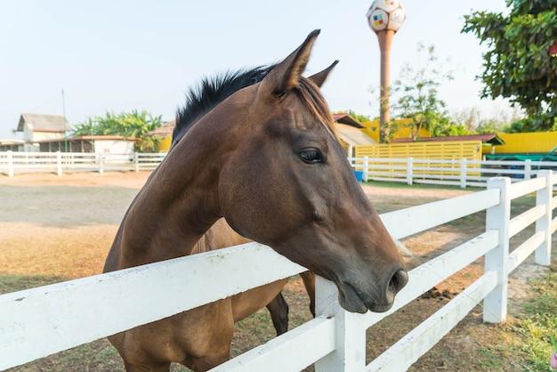Cavalo Foto gratuita