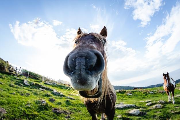 Cavalos com rostos engraçados e curiosos em liberdade na montanha Foto Premium