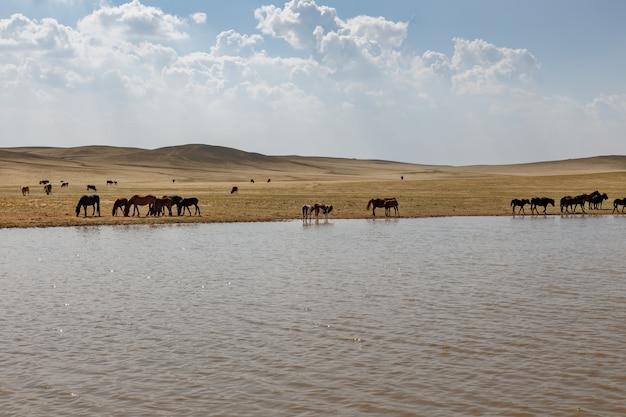 Cavalos e vacas pastam perto de uma lagoa, mongólia interior, china Foto Premium