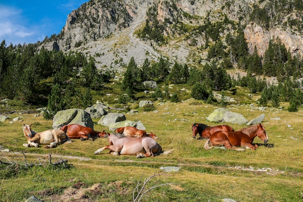 Cavalos em liberdade, parque nacional de aigãƒâ'ã¼estortes e estany de sant maurici. Foto Premium