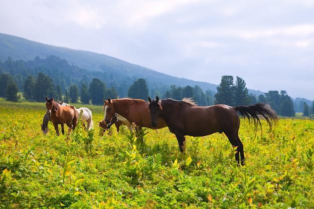 Cavalos em montanhas prado Foto gratuita