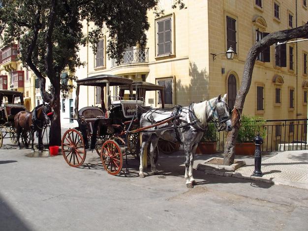 Cavalos em valletta, malta Foto Premium