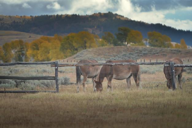 Cavalos na fazenda Foto Premium