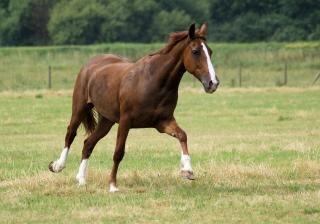 Cavalos na holanda Foto gratuita