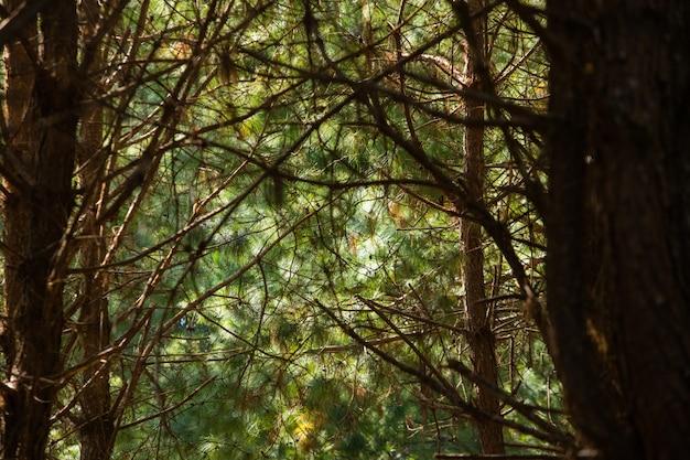 Caverna, árvore, em, floresta Foto Premium