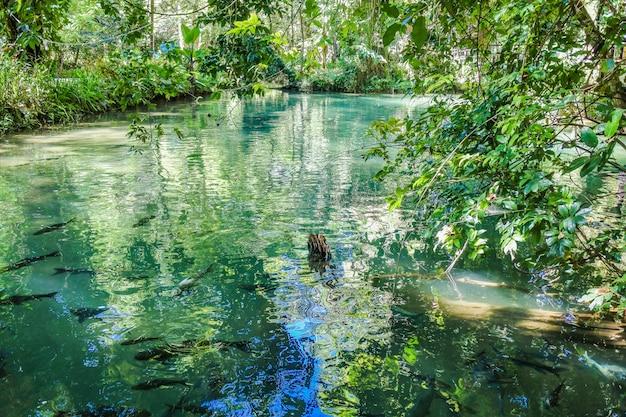 Caverna de peixes de tham pla, filho de mae hong, tailândia Foto Premium