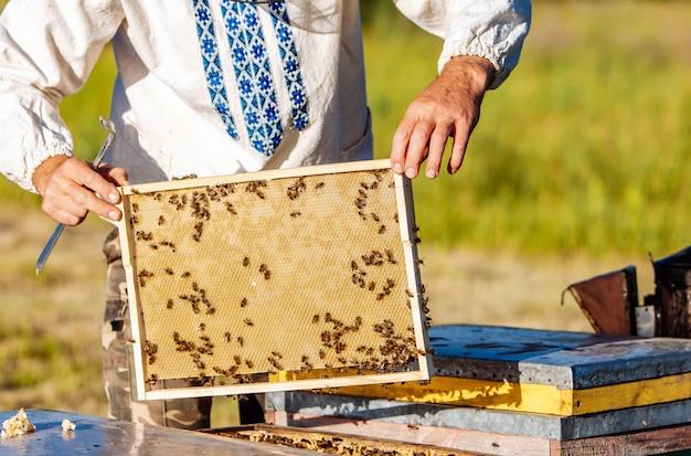 Célula de mel com abelhas closeup em um dia ensolarado. apicultura. apiário Foto Premium