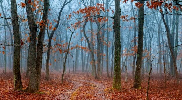 Cena de horror de uma floresta escura com árvores de blach e nevoeiro azul Foto Premium
