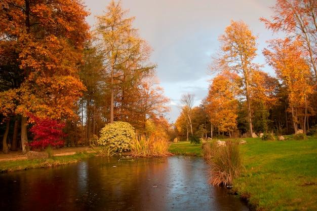 Cena de outono com rio Foto Premium