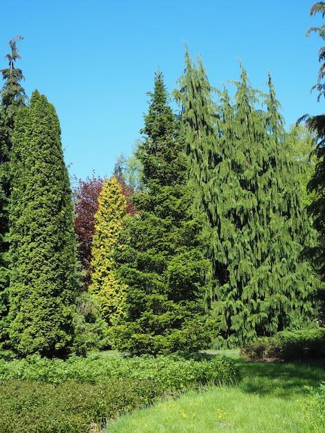 Cenário de diferentes tipos de árvores tocando o céu claro Foto gratuita