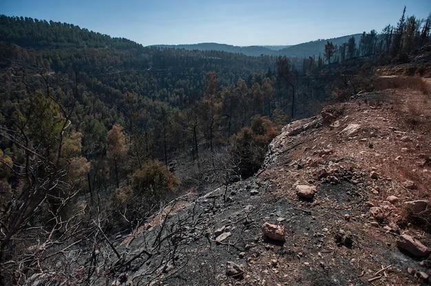 Cenário de floresta nas montanhas durante o dia Foto gratuita
