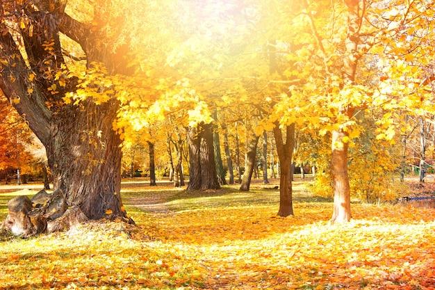 Cenário de outono. Foto gratuita