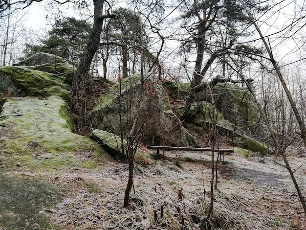Cenário de uma floresta verde em larvik, noruega Foto gratuita