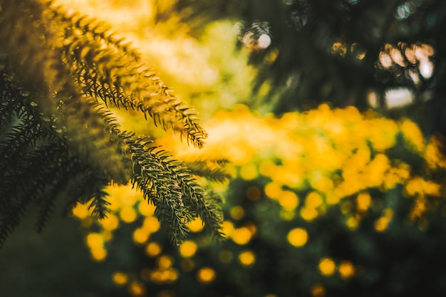 Cenário hipnotizante de uma floresta cheia de plantas floridas euryops pectinatus Foto gratuita