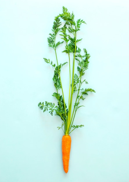 Cenoura fresca no fundo azul pastel, vista superior, espaço da cópia, alimento saudável. Foto Premium