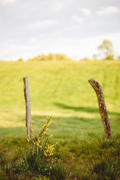 Cerca de madeira velha no campo de grama em um dia ensolarado Foto gratuita