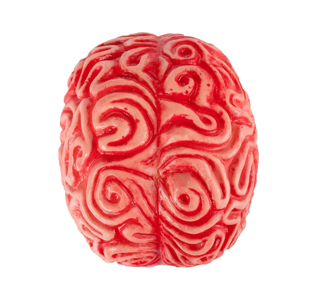Cérebro de borracha humana Foto Premium