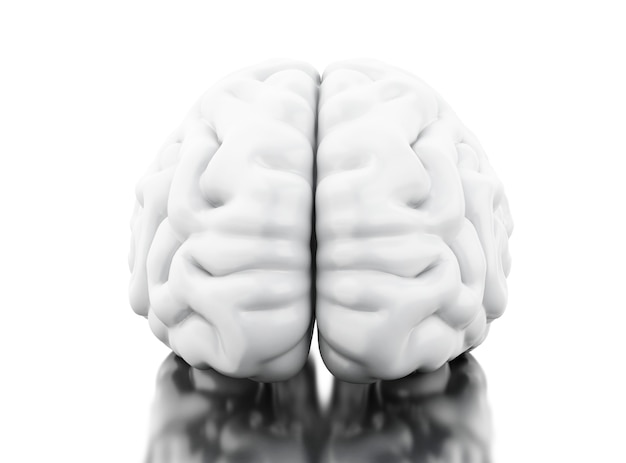 Cérebro humano 3d. conceito de anatomia da ciência Foto Premium