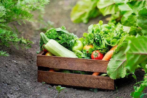 Cesta cheia de vegetais orgânicos de colheita e raiz na fazenda bio orgânica. Foto Premium
