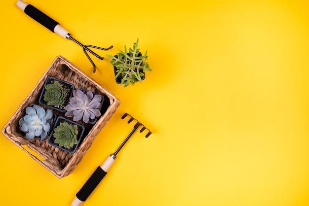 Cesta com plantas e espaço para texto Foto gratuita
