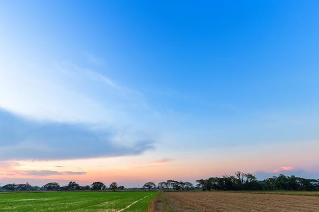 Céu azul, com, nuvens brancas Foto Premium