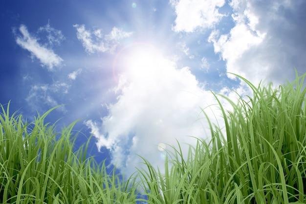 Céu azul ensolarado e grama Foto gratuita