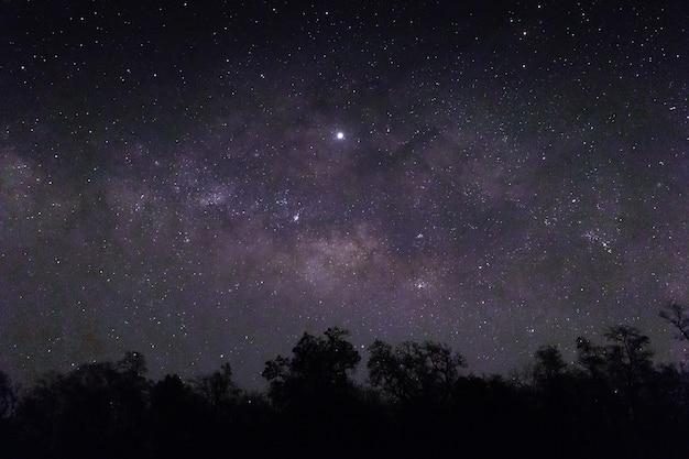 Céu cheio de estrelas e silhuetas de árvores abaixo Foto gratuita