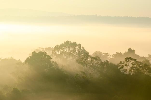 Céu da manhã e montanhas na floresta do parque nacional com fundo borrado Foto Premium