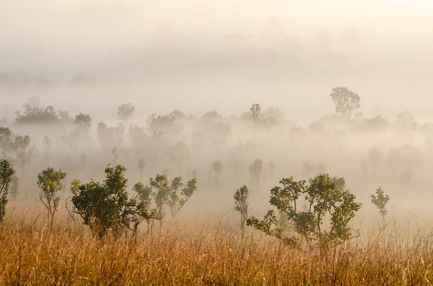 Céu da manhã na floresta do parque nacional com fundo borrado Foto Premium