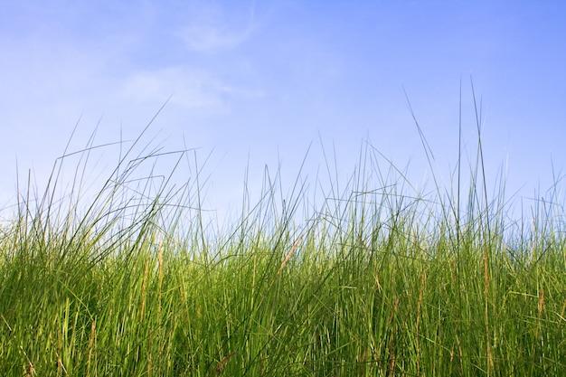 Céu netherlands duna idílica paisagem Foto gratuita