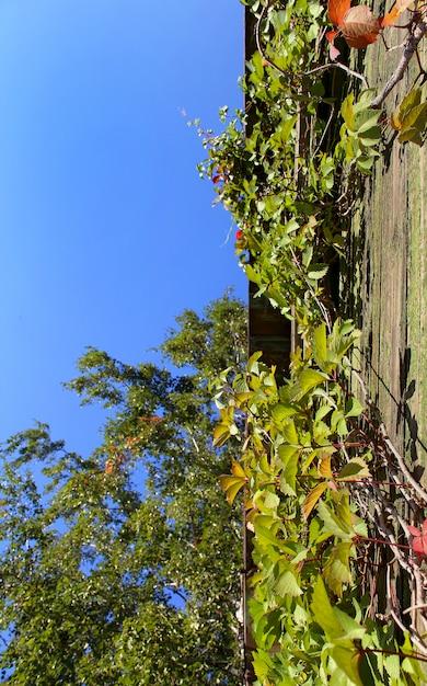 Céu no jardim Foto Premium