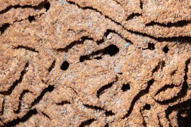 Chão da raiz, ninho das térmitas Foto Premium