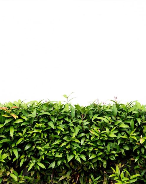 Chão de concreto com folhas verdes Foto Premium
