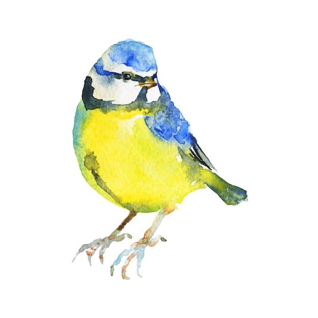 Chapim em aquarela. pássaro desenhado de mão em branco Foto Premium