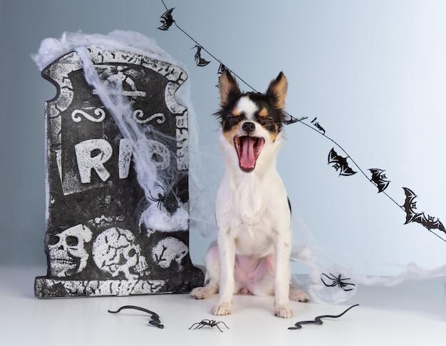 Chihuahua que cai no halloween com decoração de lápide Foto Premium